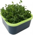 Проращиватель семян Здоровья Клад Моя Микрозелень
