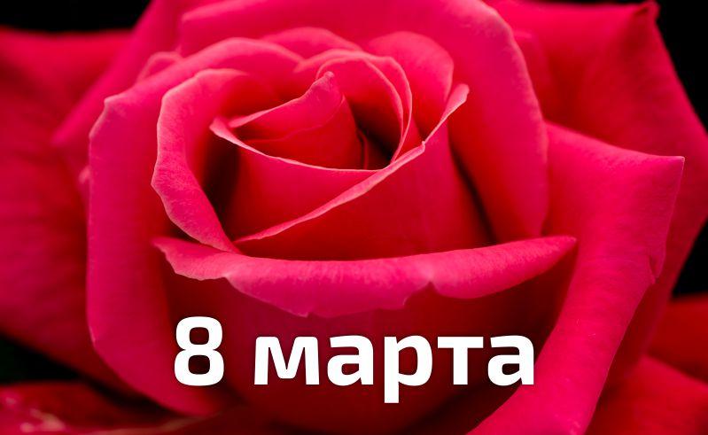 ТехМос подздравляет милых дам с 8 марта