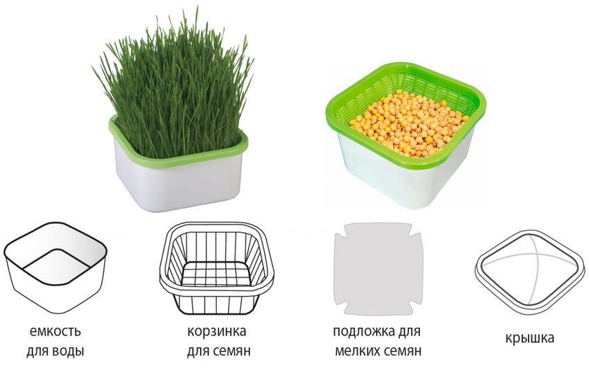 Пример простого прорасщивателя семян