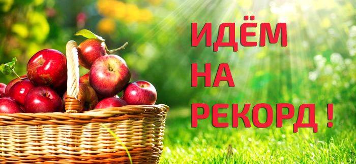 Большой урожай яблок требует сушилку увеличенной мощности